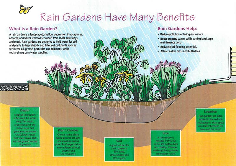 Rain Gardens Have Many Benefits Diagram